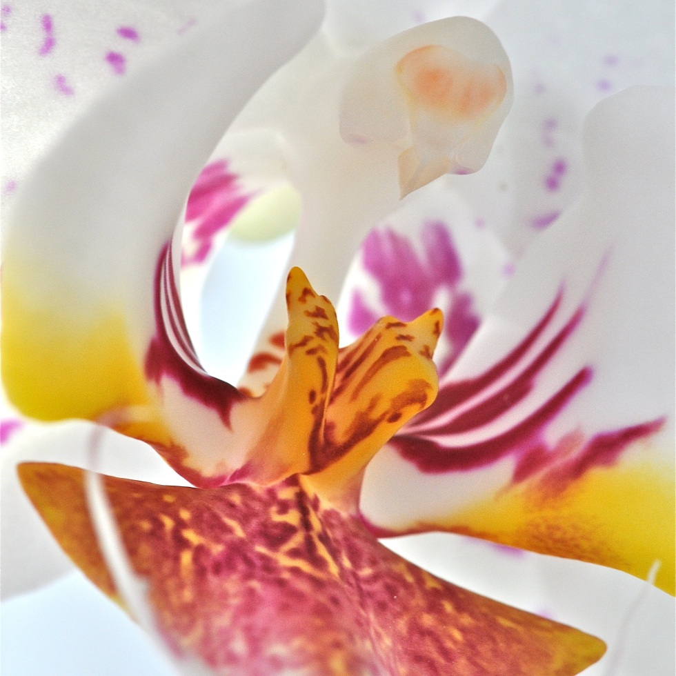 deeply orchid