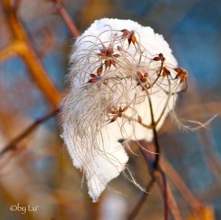 like cotton