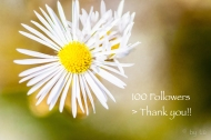 100 followers > Thank you!